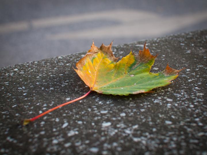 Walking Hamburg in Fall